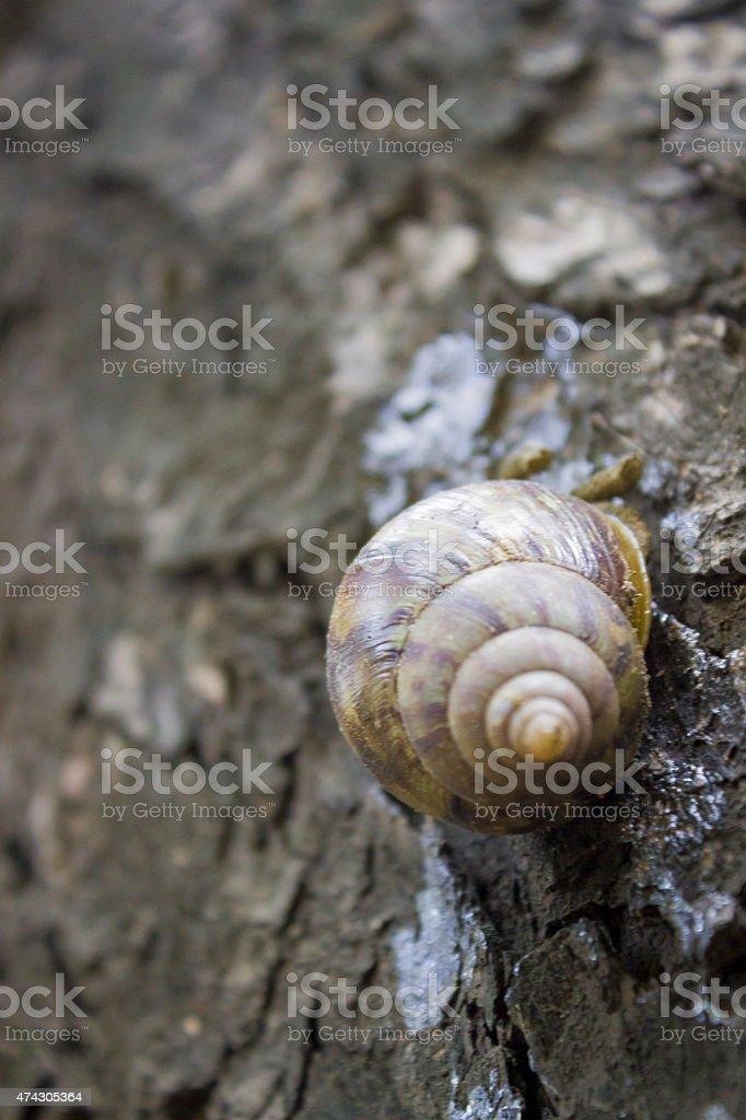 Macro photograph of snail on tree stock photo