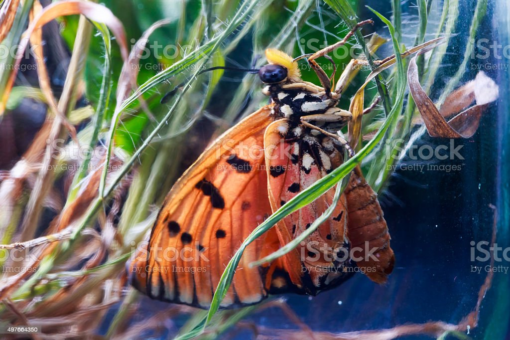 macro photography of orange butterfly on the grass in jar stock photo