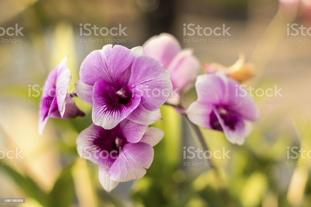 Macro picture of pink orchid royalty-free stock photo