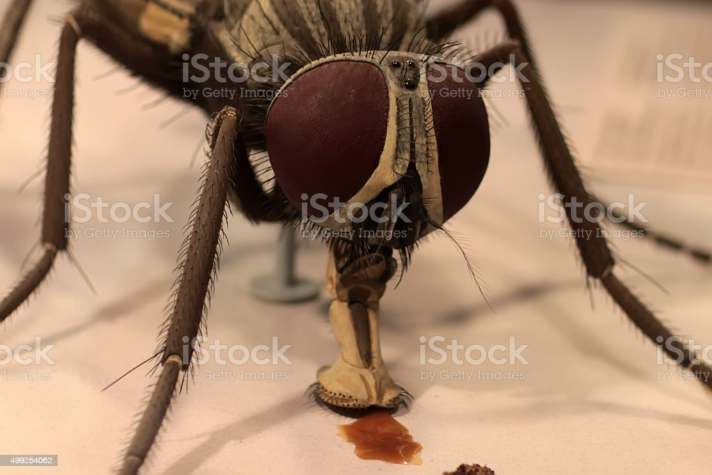 Macro portrait of fly stock photo
