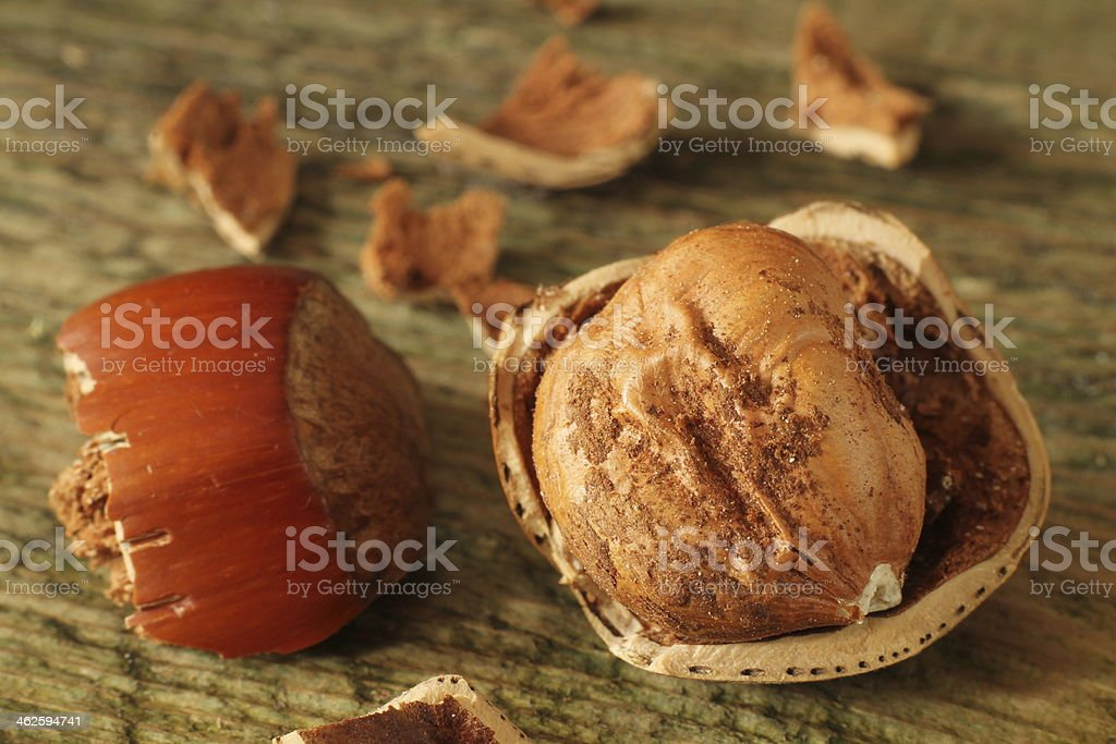 macro shoot of a hazelnut stock photo