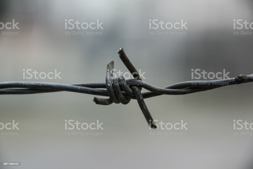 Macro shooting Barbed wire stock photo