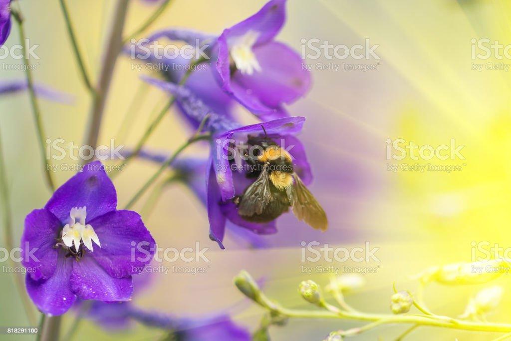 A macro shot of a bumblebee stock photo