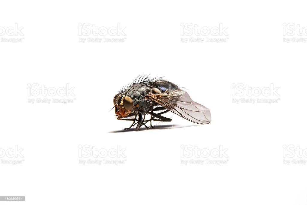Macro shot of a housefly. stock photo
