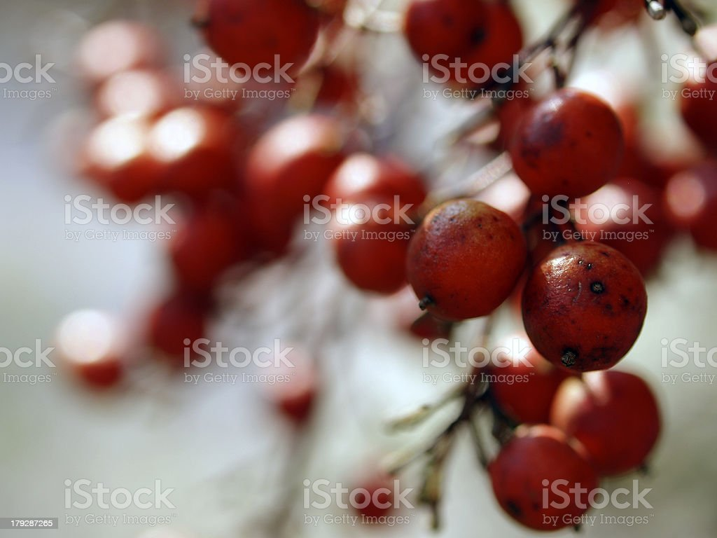 Macro shot of berries royalty-free stock photo