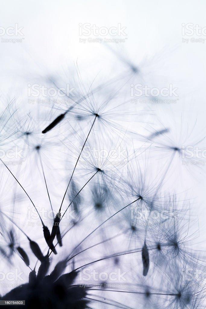 Macro Shot Of Dandelion Seed royalty-free stock photo
