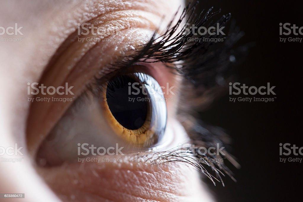 Macro shot of female brown eyes stock photo