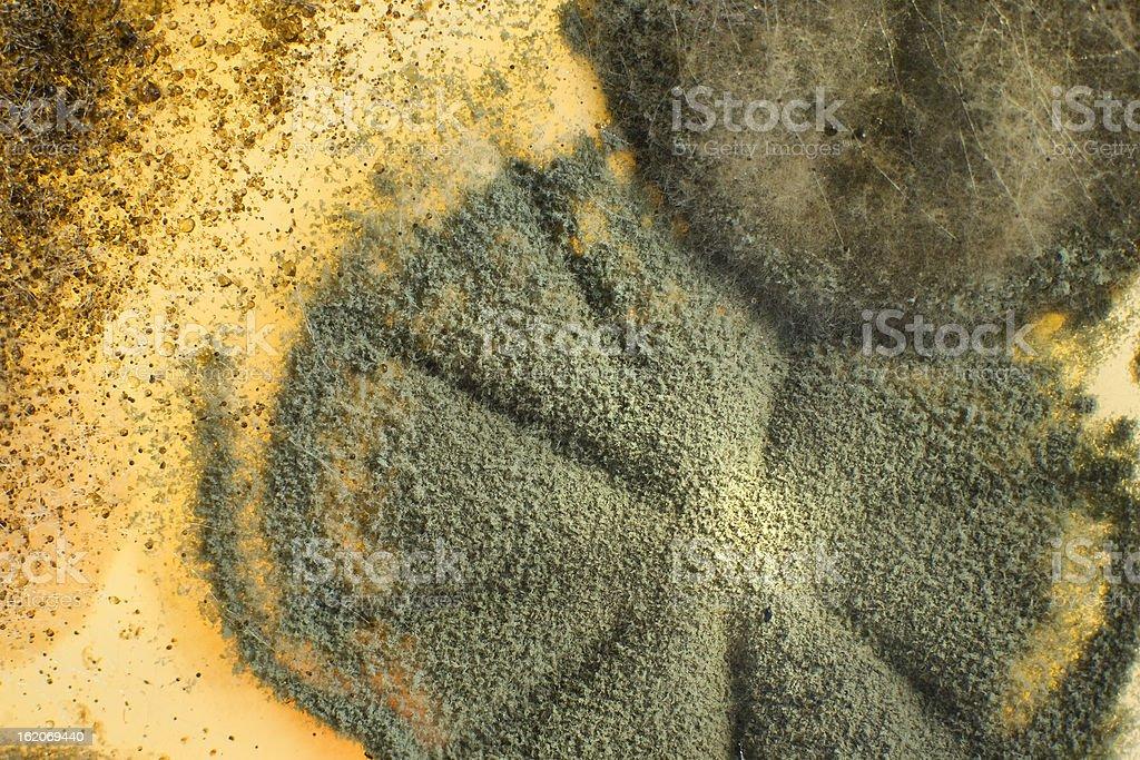 Macro shot of mold royalty-free stock photo