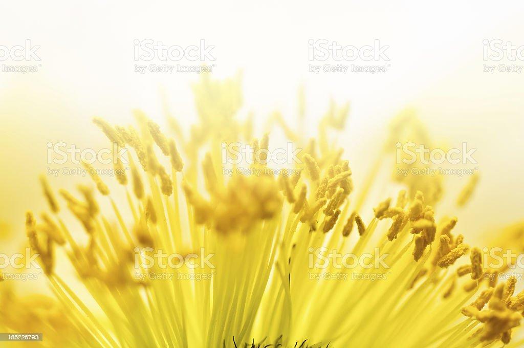 macro shot of pollen stock photo