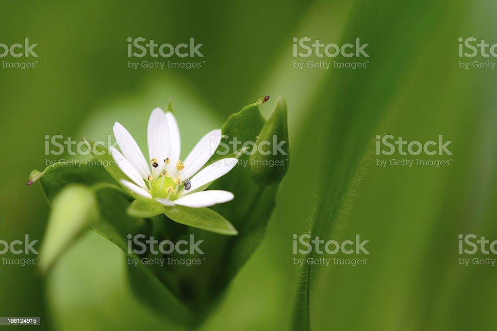 Macro shot of white flower royalty-free stock photo