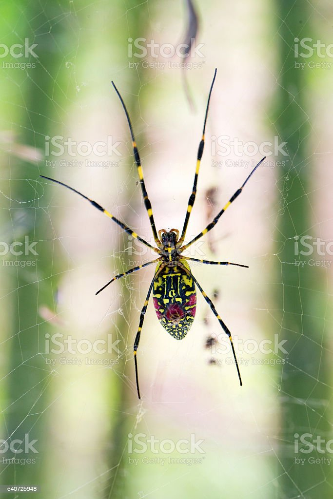 Macro spider in web with blurry background stock photo