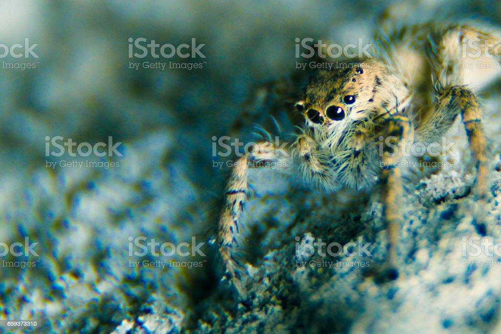 Macro spider stock photo