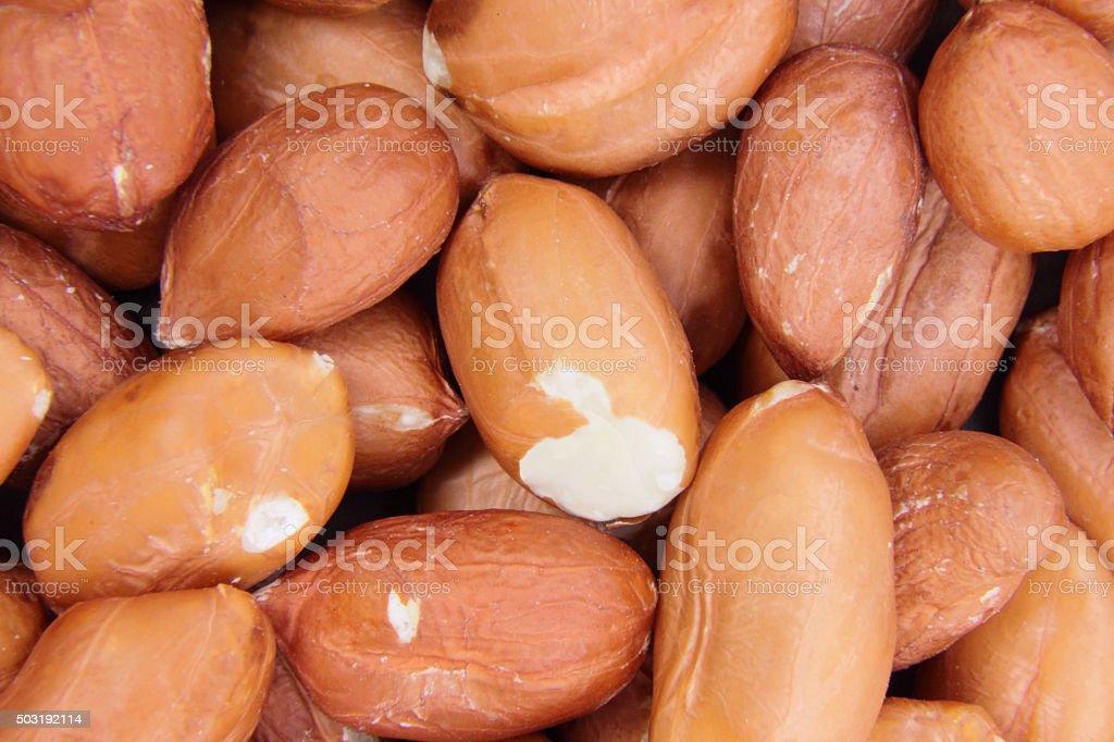 Macro study of freshly harvested groundnuts ( Arachis hypogaea ) stock photo