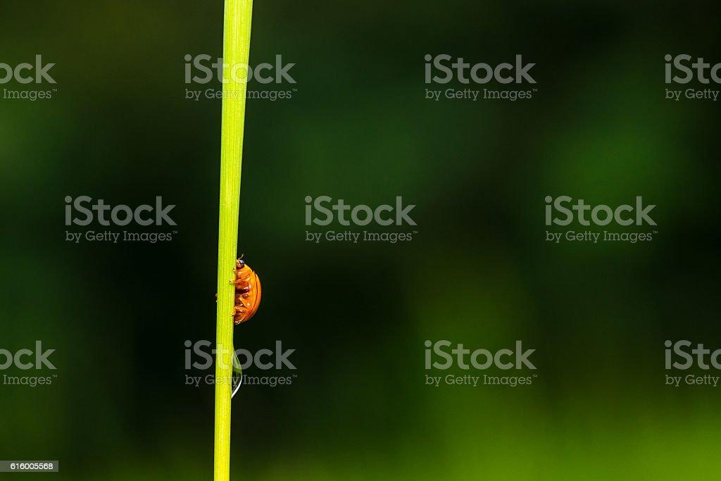 Macro the small insect orange stock photo