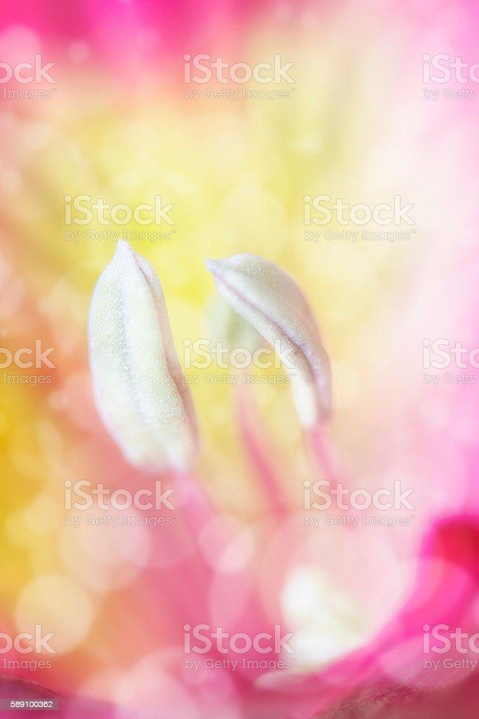 Macro tiger lily stock photo