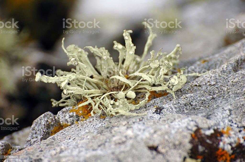 macro view of lichen stock photo