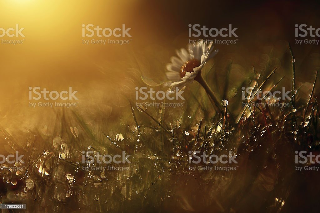 Macro view of wildflower royalty-free stock photo