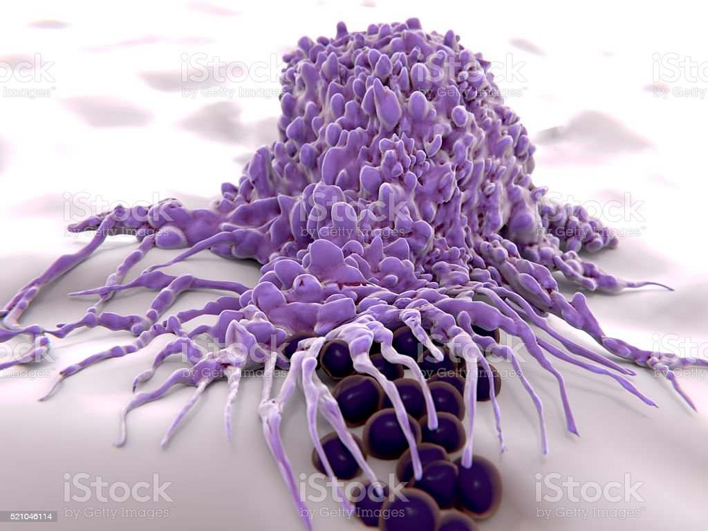 Macrophag engulfing bacteria (cocci), 3D rendering. stock photo