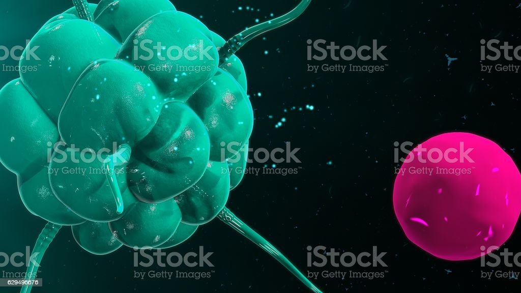 Macrophage binding with t cell stock photo