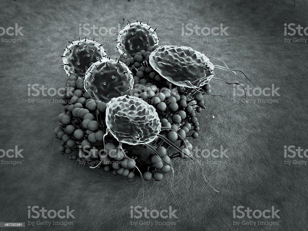 macrophage, fungus royalty-free stock photo