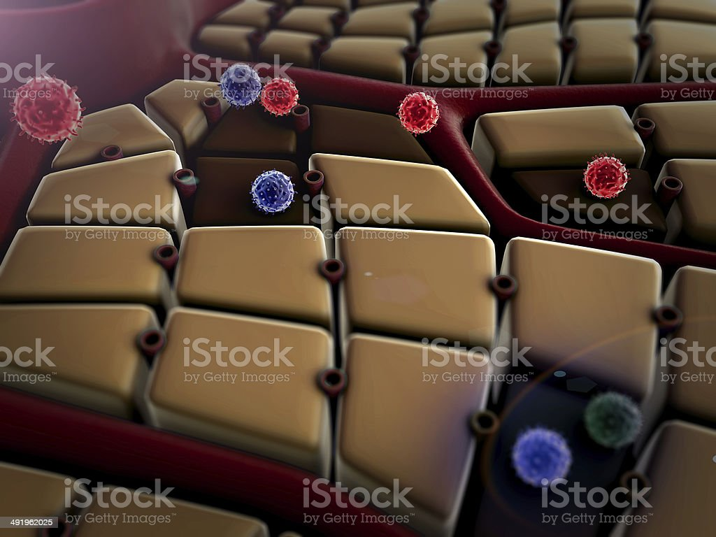 macrophage, viruses stock photo