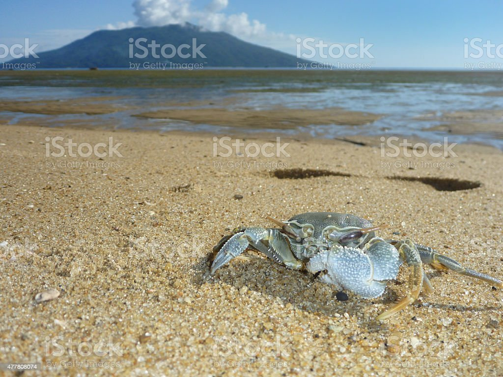 Madagascar beach crab and Nosy Be island Indian Ocean stock photo