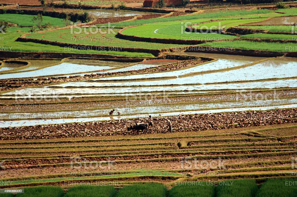 Madagascar: Terraced Farming Near Fiadanana stock photo