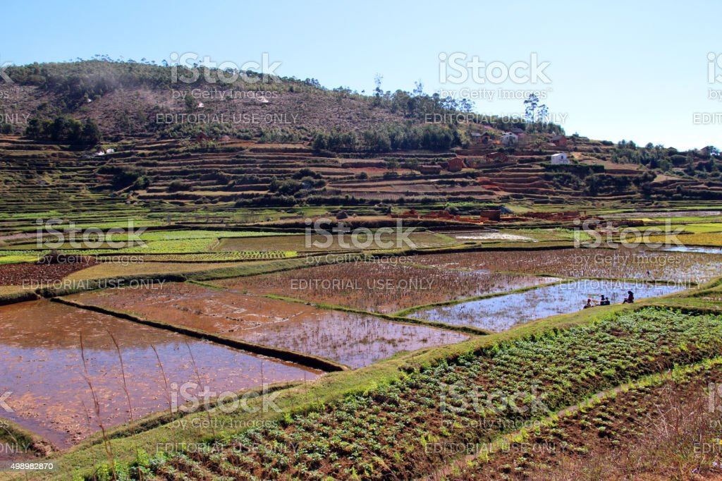 Madagascar: Terraced Farming Near Peyrieras stock photo