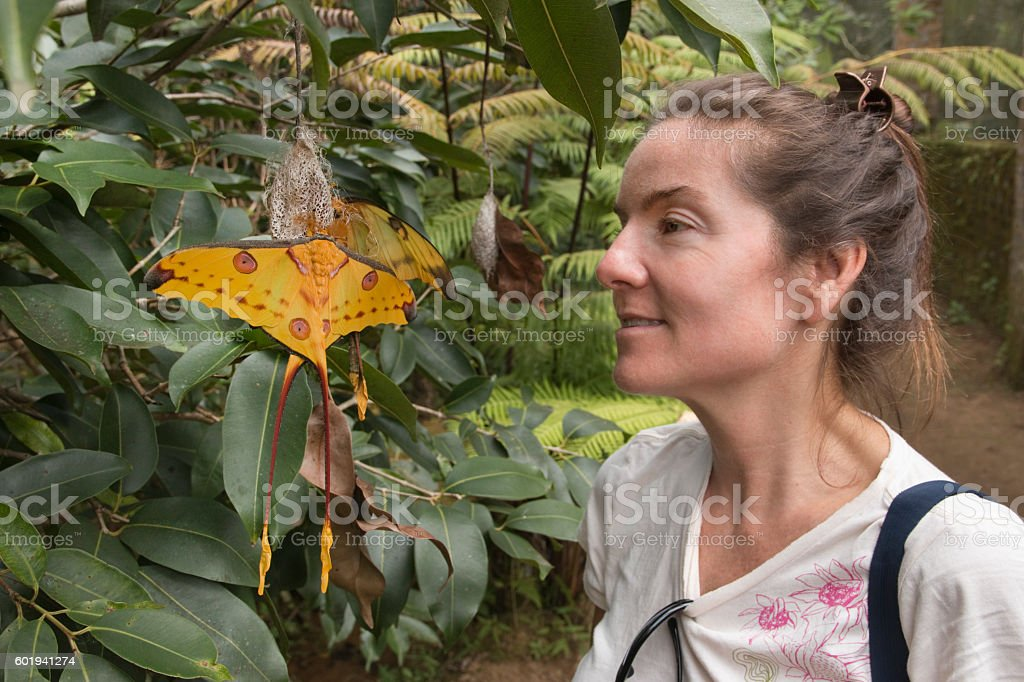 Madagascar woman visitor views pair of endemic comet moths stock photo