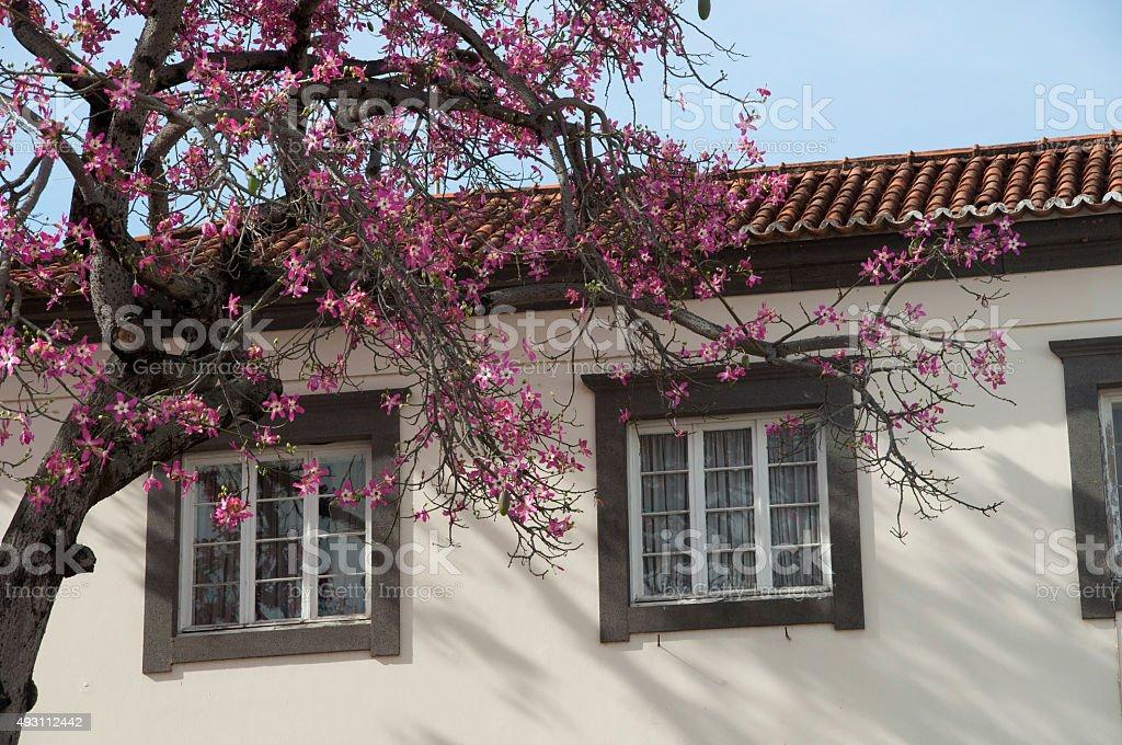 Madeira Blossom stock photo