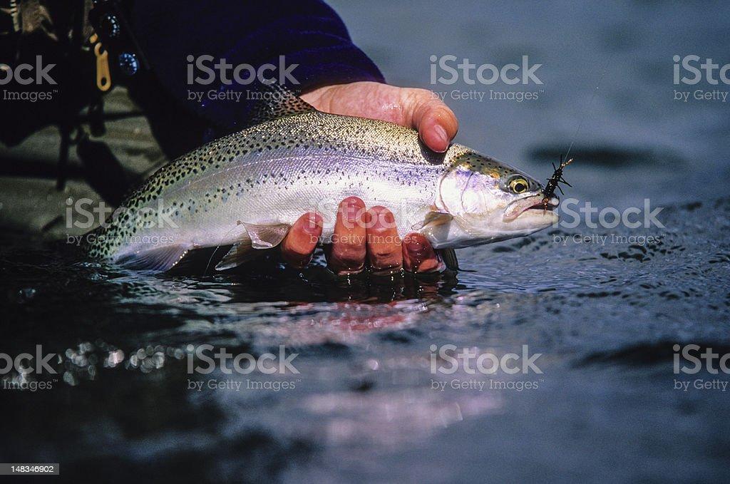 Madison River Rainbow stock photo