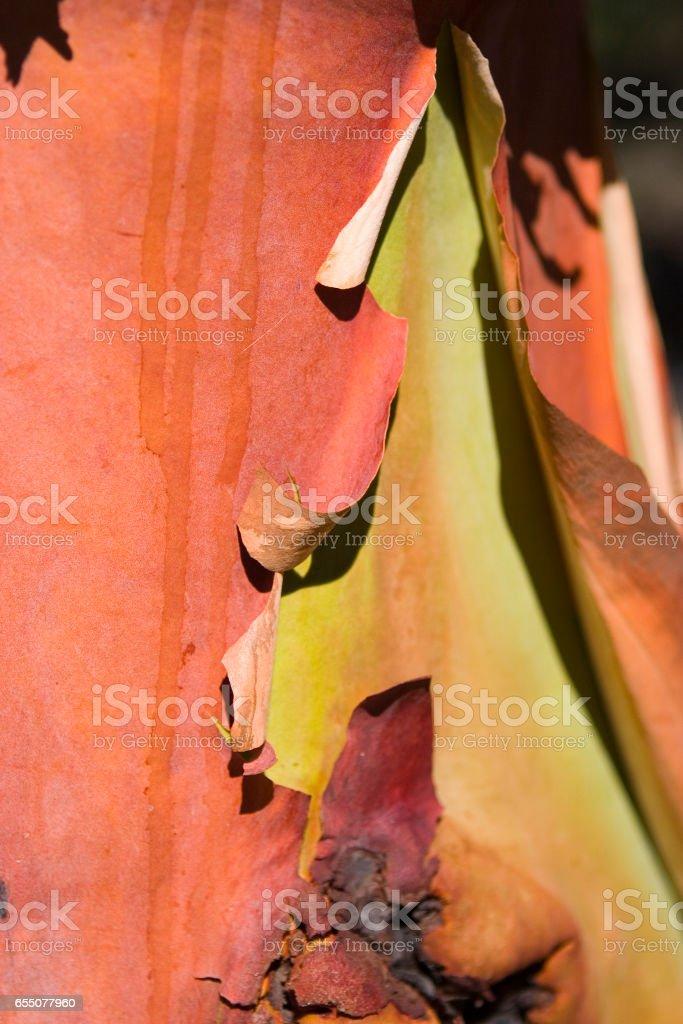 Madrona Bark Detail stock photo