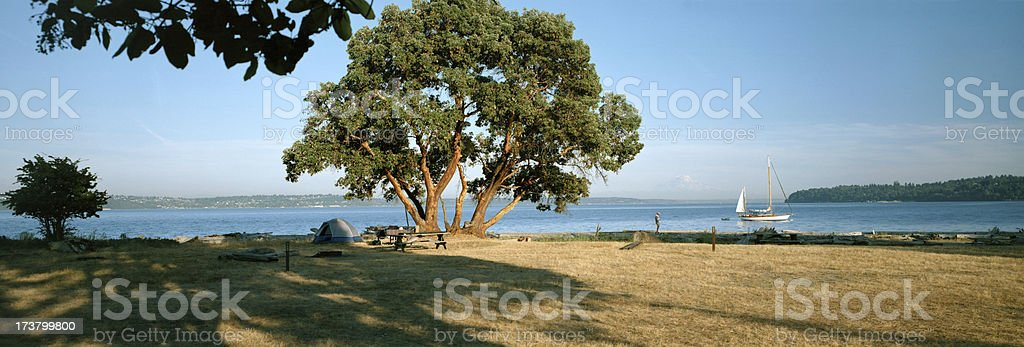 Madrona Tree  at Campsite on Blake Island, Washington stock photo