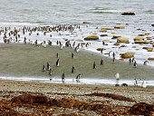 Magellanic penguins in Patagonia,Chile