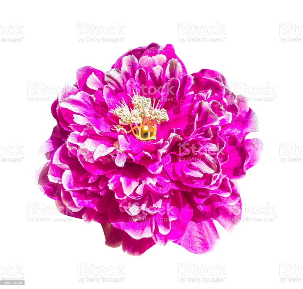 Magenta artificial flower isolated stock photo