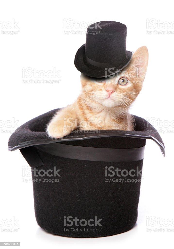 magic cat stock photo