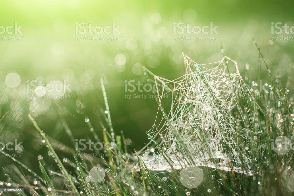 Magic cobweb teint herbe photo libre de droits
