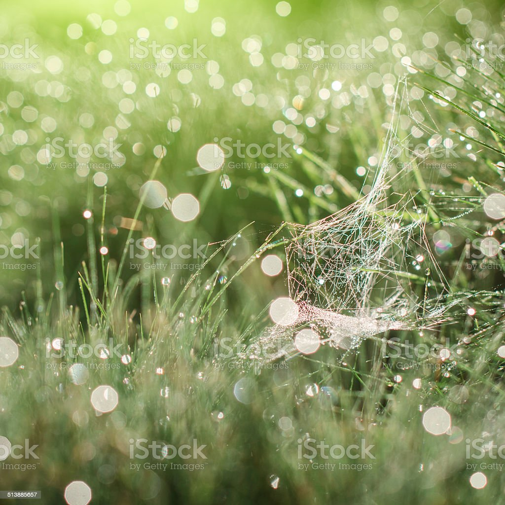 Magic cobweb teint herbe photo libre de droits