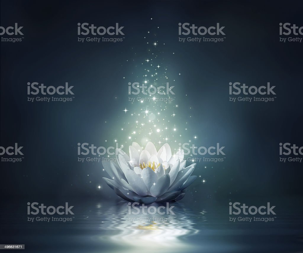 magic flower on water stock photo