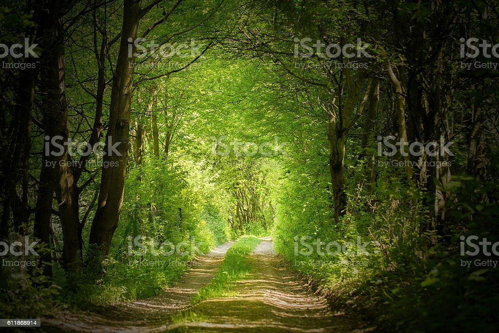 magic forest path stock photo