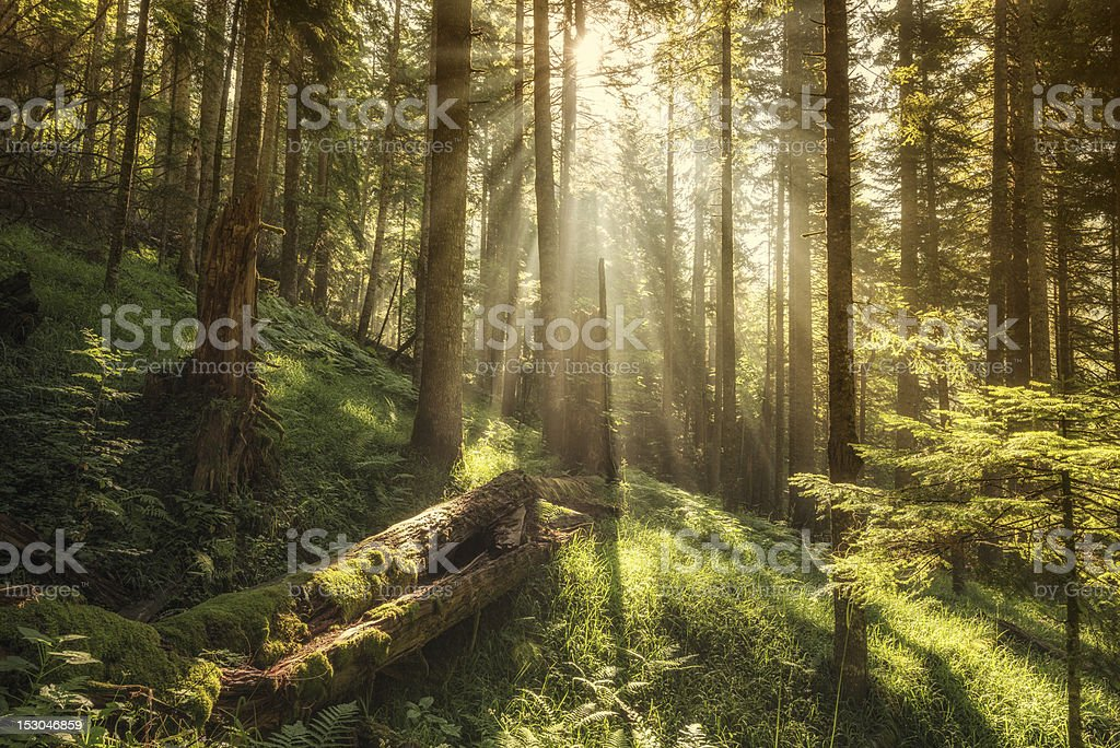 Magic Forest stock photo