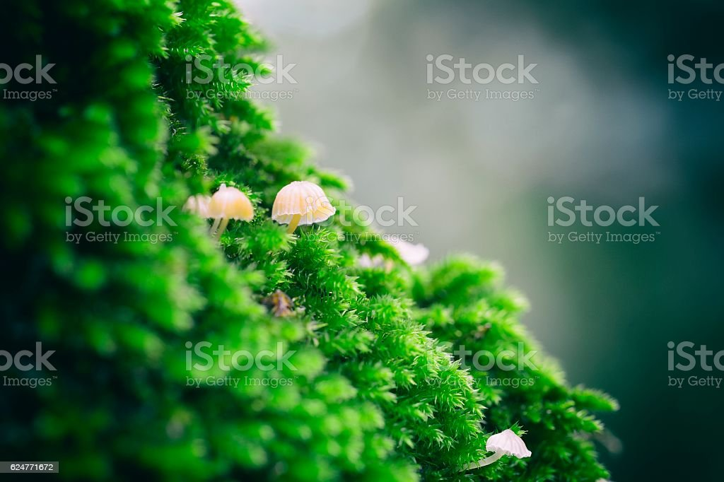 Magic Mushroom stock photo