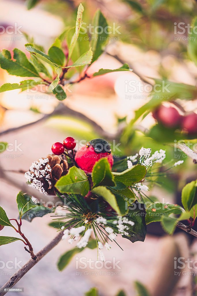 Magic of Christmas. Bird in tree branches with winter berries stock photo