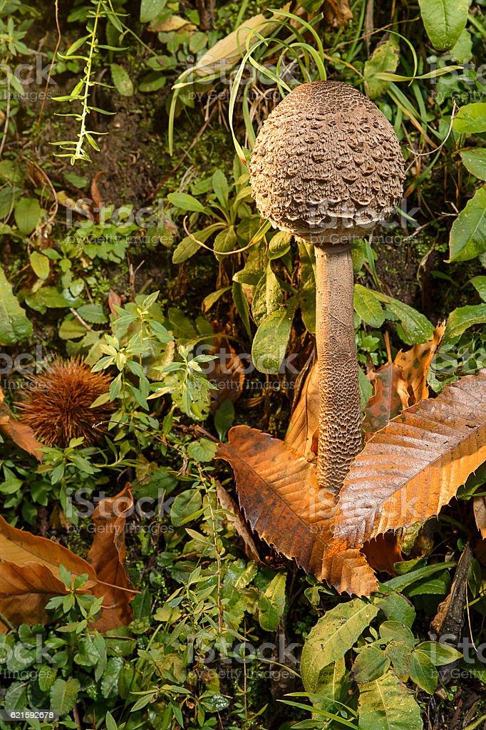 Magic poisonous mushroom stock photo