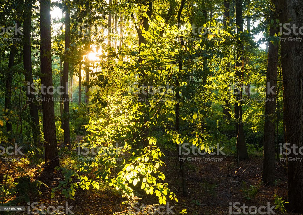 magic sunlight in the forest stock photo