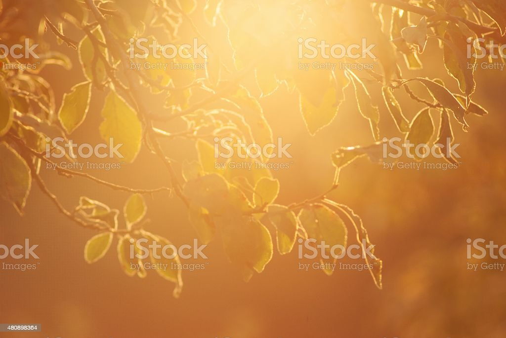 magic sunshine stock photo