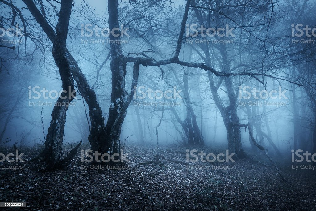 Magic tree in mysterious autumn forest in blue fog in the rainy...