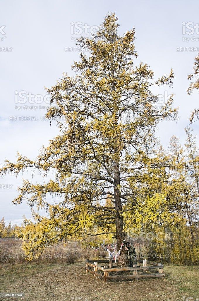 Magic Tree. royalty-free stock photo