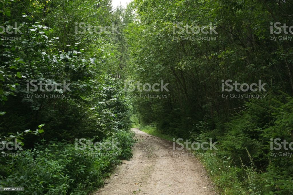 Magic trees and paths in the forest. stock photo