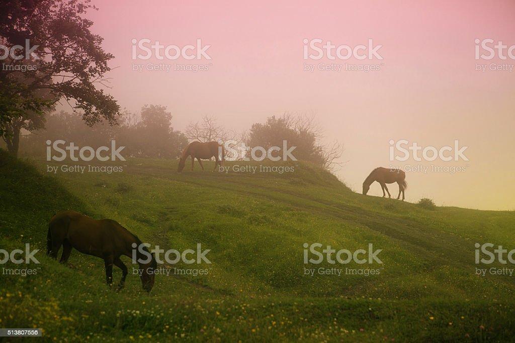 Magic twilight stock photo